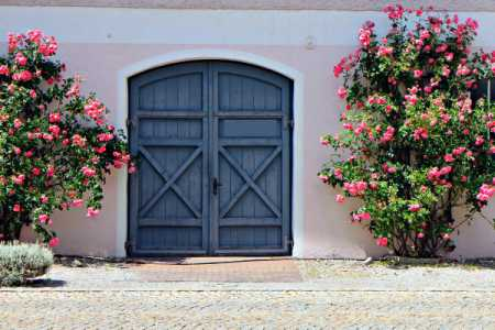 roses around an entrance gate