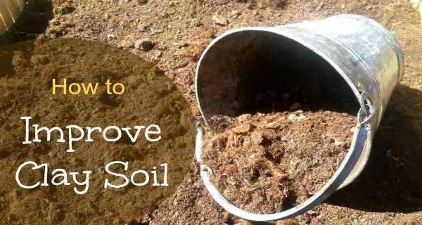 Improve clay soil