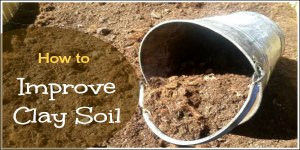 Improving clay soil