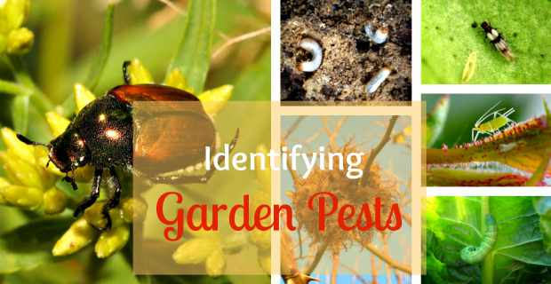 Identifying Garden Pests