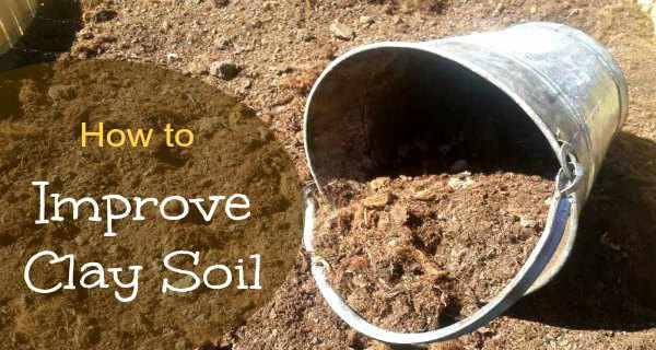 Improve clay soil